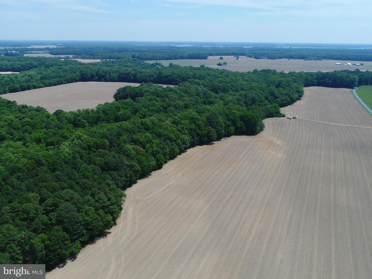 土地 のために 売買 アット BEAVER Lane BEAVER Lane Trappe, メリーランド 21673 アメリカ合衆国