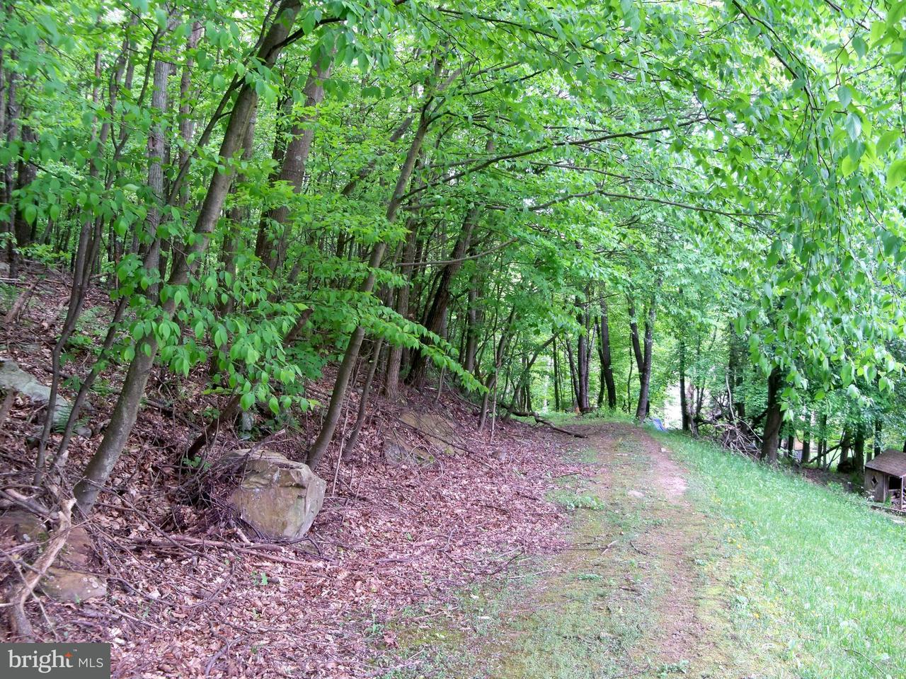 Land for Sale at Martin Hollow Rd Midland, Maryland 21542 United States