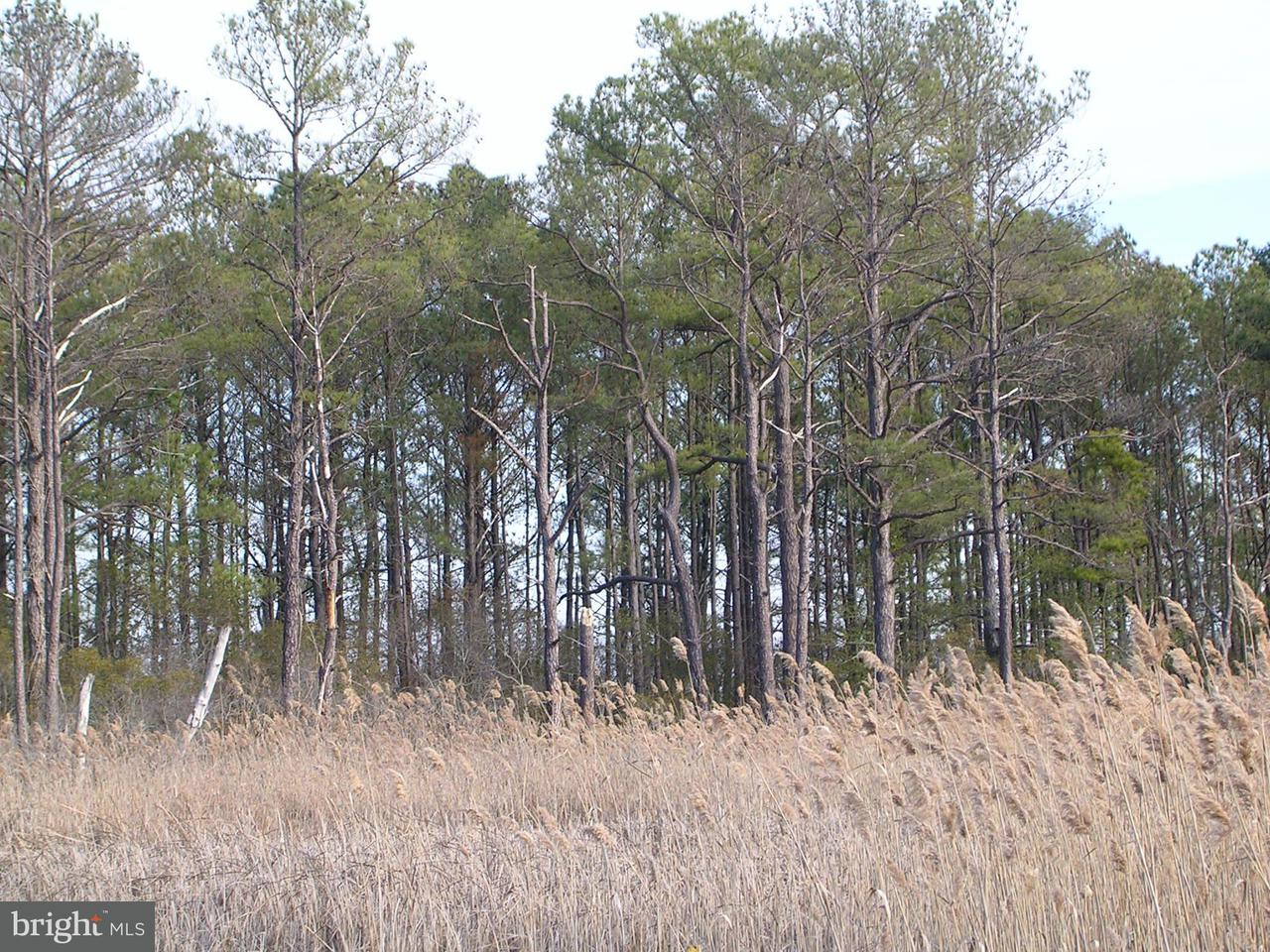 Land for Sale at 2731 Sandy Island Rd Crapo, Maryland 21626 United States