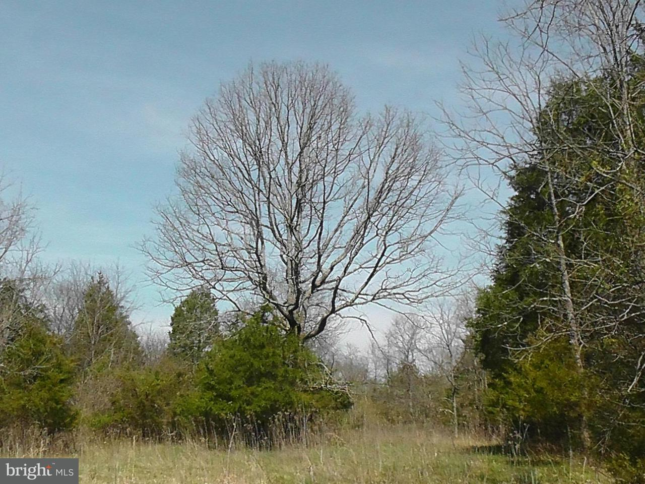 Land for Sale at C Old Barn Road Rixeyville, Virginia 22737 United States