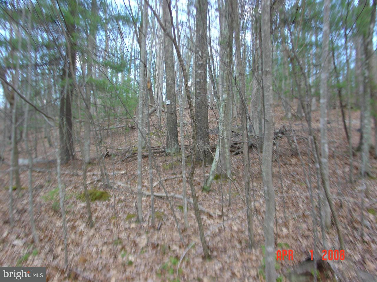 Land for Sale at 64-C Trout Pond Lost City, West Virginia 26810 United States