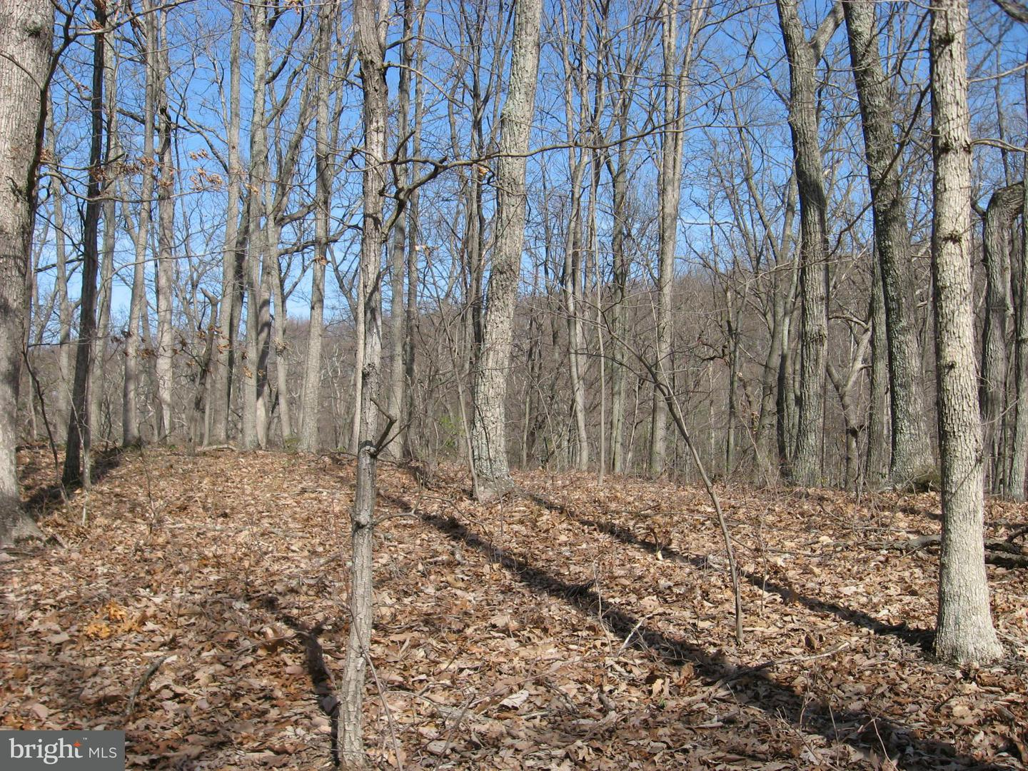 Land for Sale at Lt 43 Hummingbird Lane Star Tannery, Virginia 22654 United States