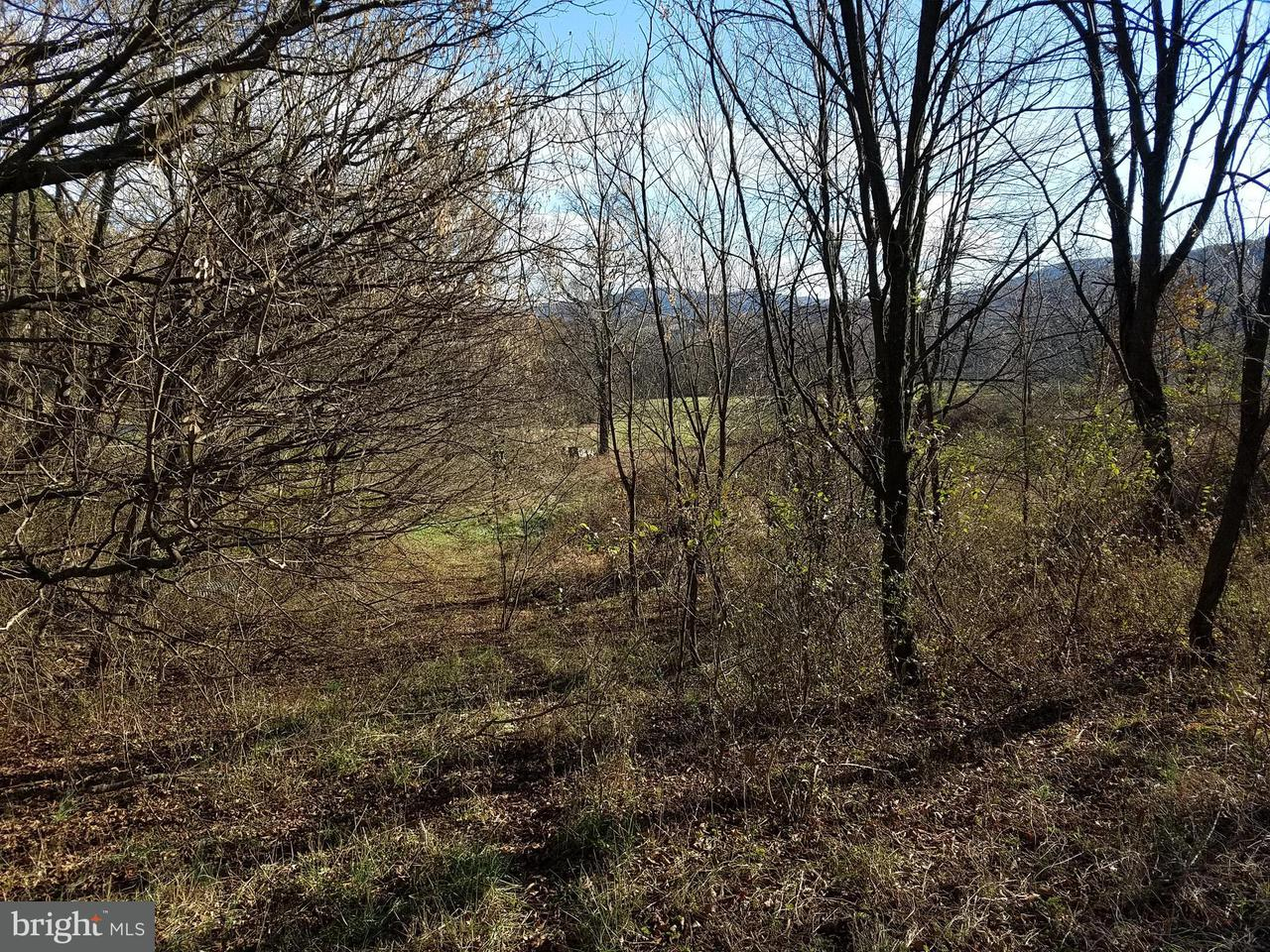 Land for Sale at S Lick Run Rd Delray, West Virginia 26714 United States