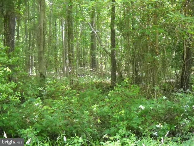 Land for Sale at Upland Dr Bushwood, Maryland 20618 United States