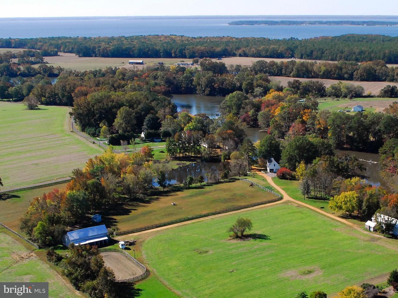 Farm for Sale at 17233 Jutland Dr St. Inigoes, Maryland 20684 United States