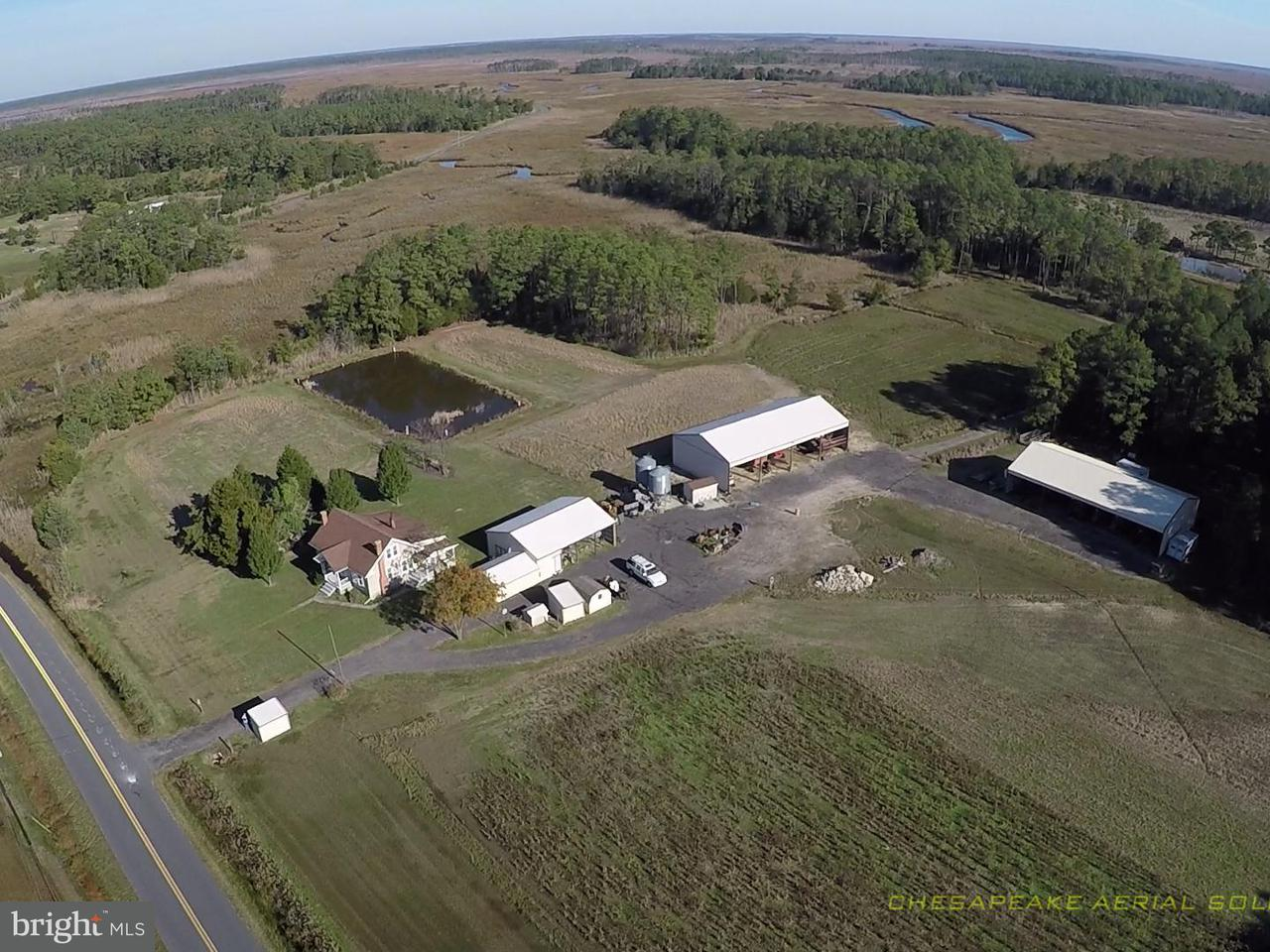 Farm for Sale at 2512 Toddville Rd Crapo, 21626 United States