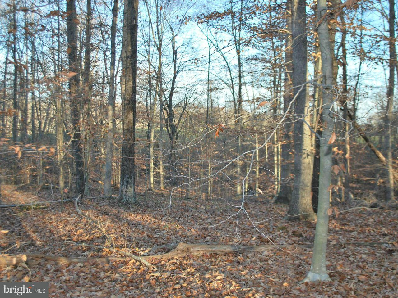 Land for Sale at Pine Stake Rd Rhoadesville, Virginia 22542 United States