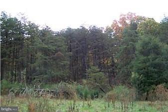 Land for Sale at Off Trinity Rd/Pine Cone Ln Junction, West Virginia 26824 United States