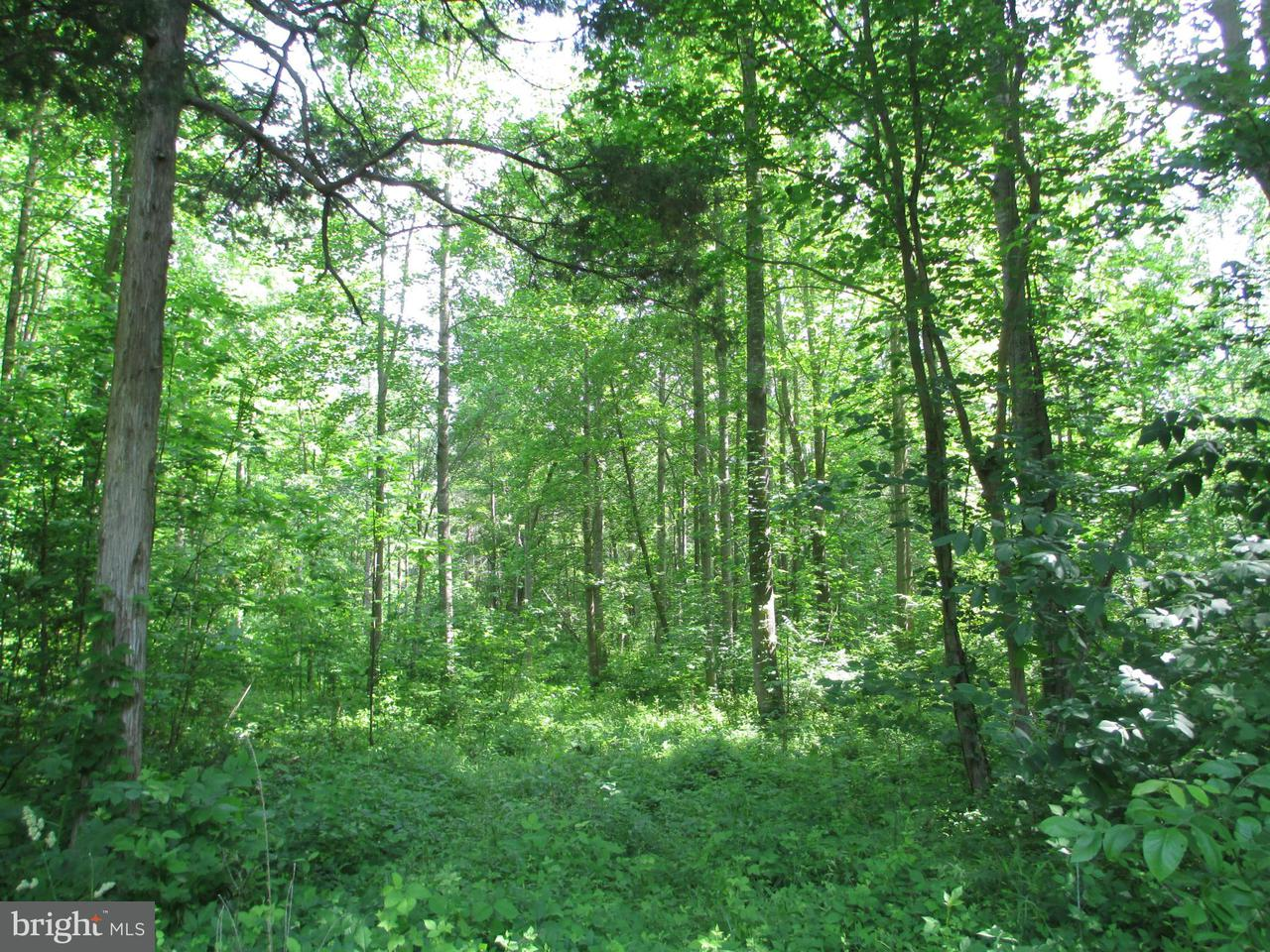 Additional photo for property listing at Slasher Pl  Mineral, Virginia 23117 United States