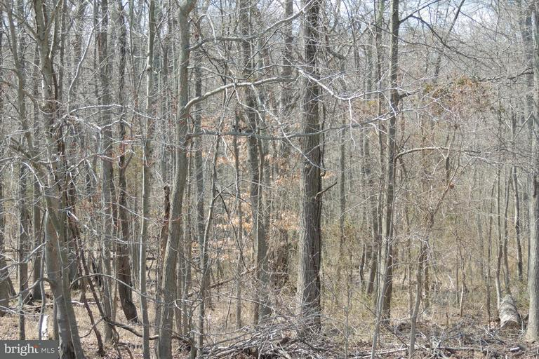 Land for Sale at Lot 200 Calvert St Edgewater, Maryland 21037 United States