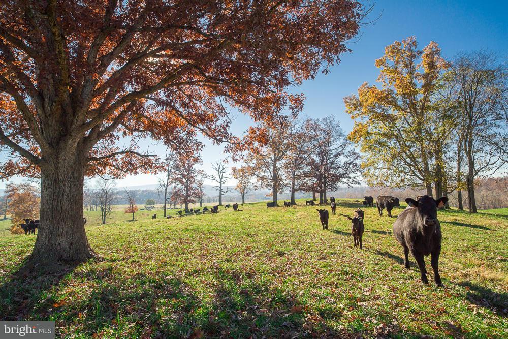 Terrain pour l Vente à 1580 ELLERSLIE Road 1580 ELLERSLIE Road Berryville, Virginia 22611 États-Unis