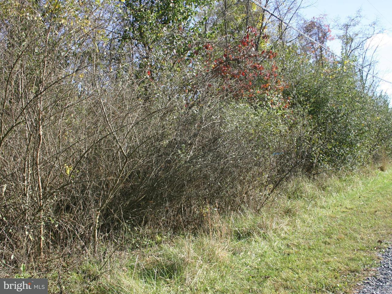 Land for Sale at Bill Stultz Rd Levels, West Virginia 25431 United States