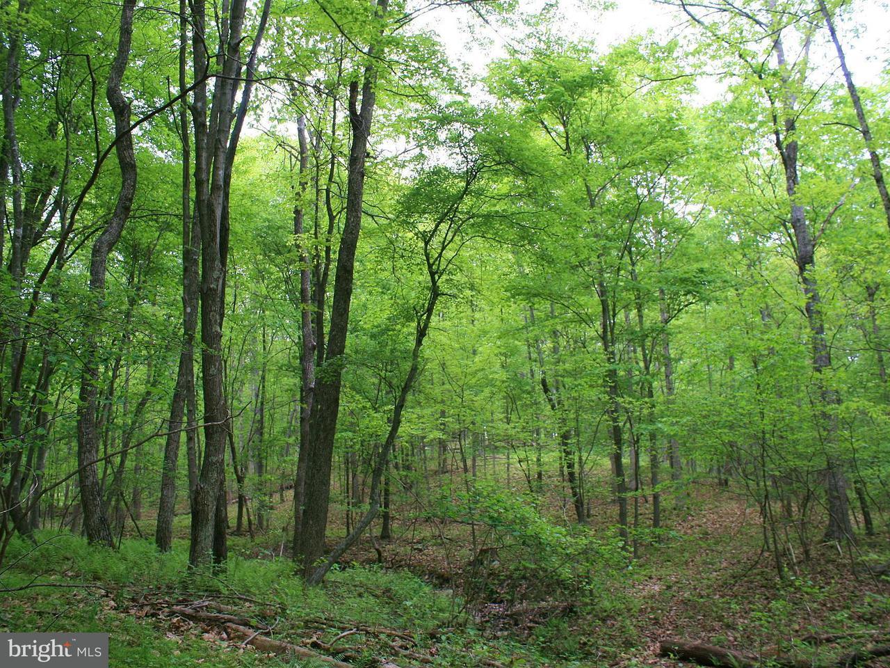 Land for Sale at Deer Track Lane Slanesville, West Virginia 25444 United States