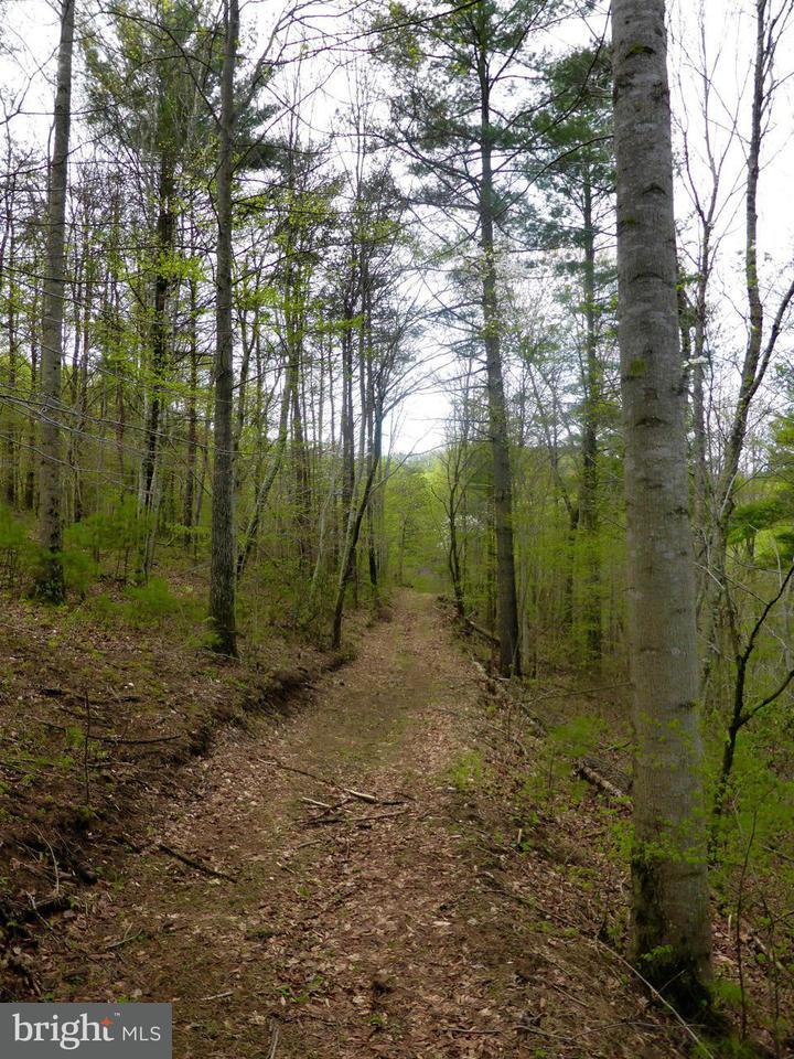 Land for Sale at 252lot #3 Doe Ridge Ln Amherst, Virginia 24521 United States