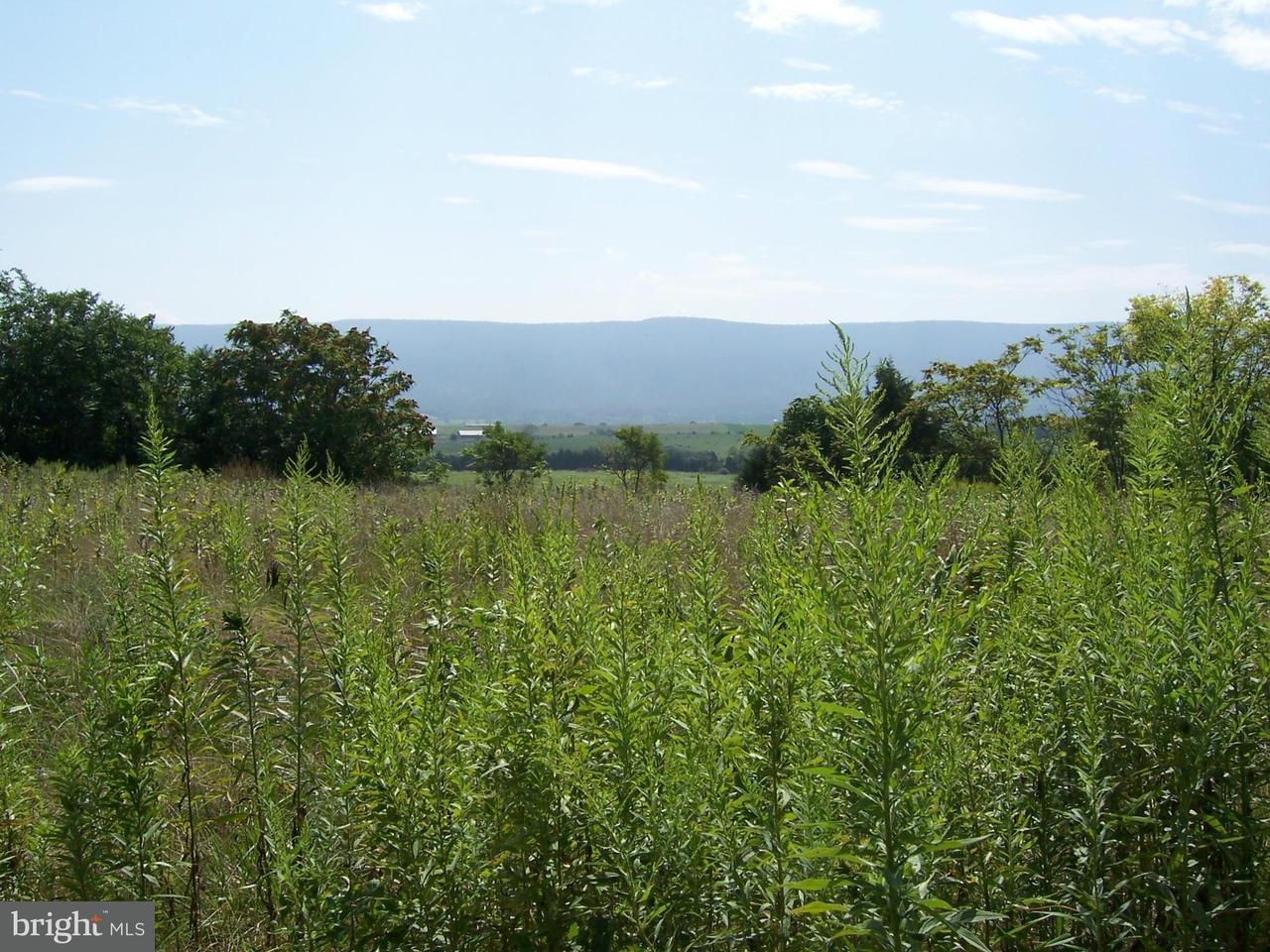 Land for Sale at South Middle Road Mount Jackson, Virginia 22842 United States