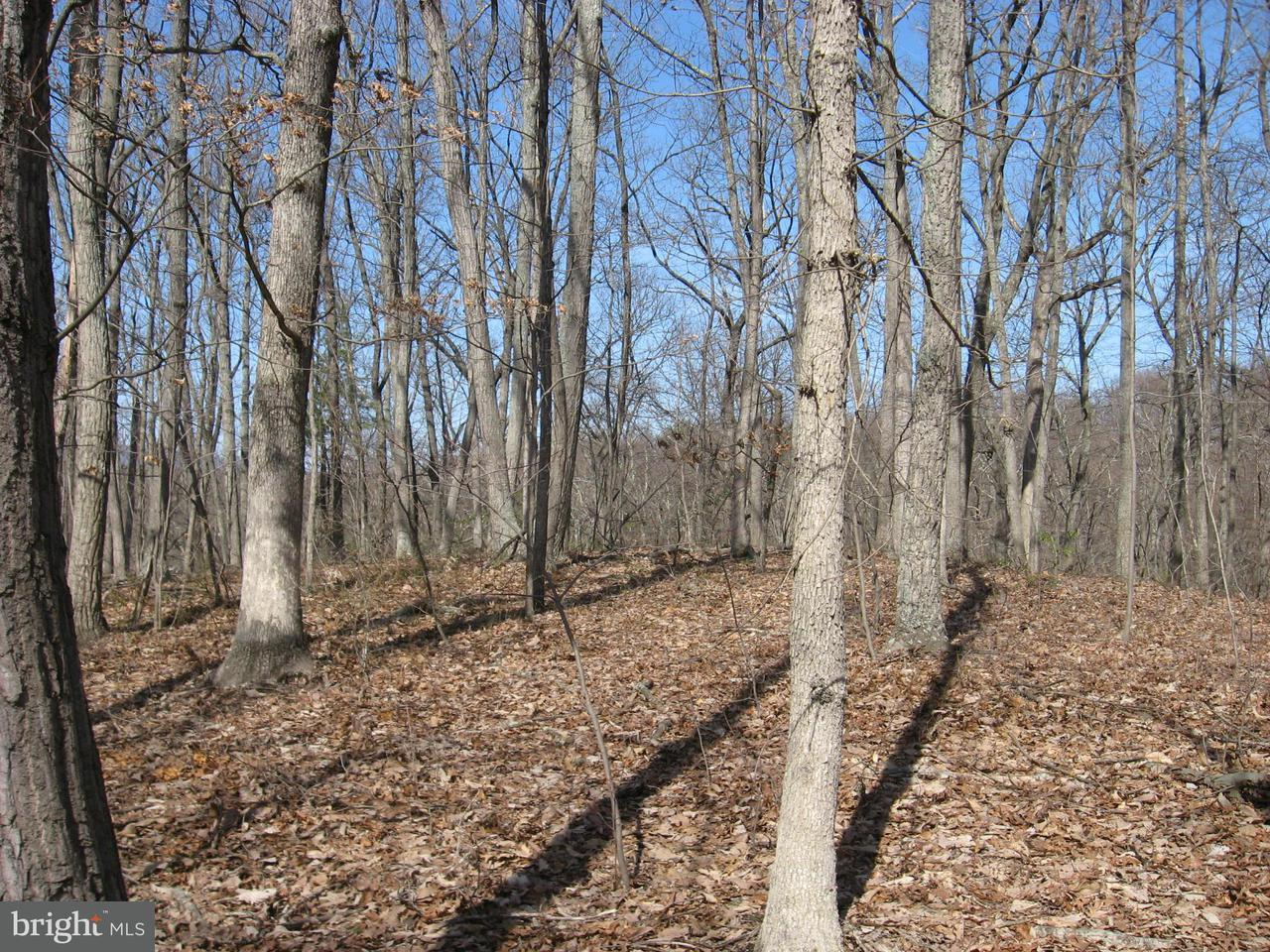 Additional photo for property listing at Lt 43 Hummmingbird Lane  Star Tannery, Virginia 22654 United States
