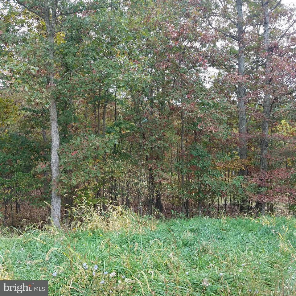 Land for Sale at 13900 Rolling Oak Dr Ellerslie, Maryland 21529 United States