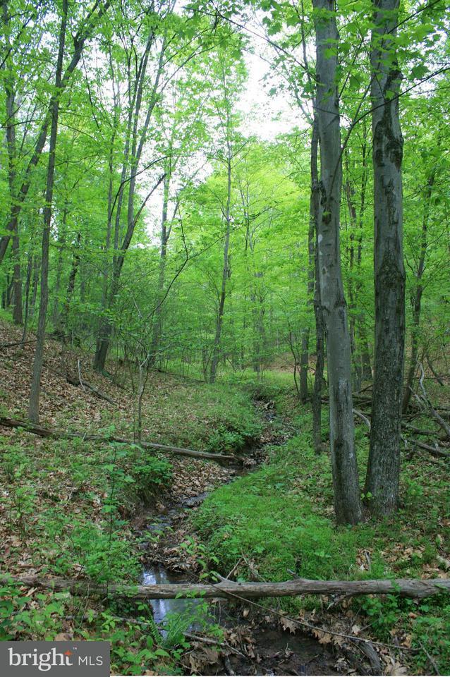 Additional photo for property listing at Deer Track Lane  Slanesville, West Virginia 25444 United States