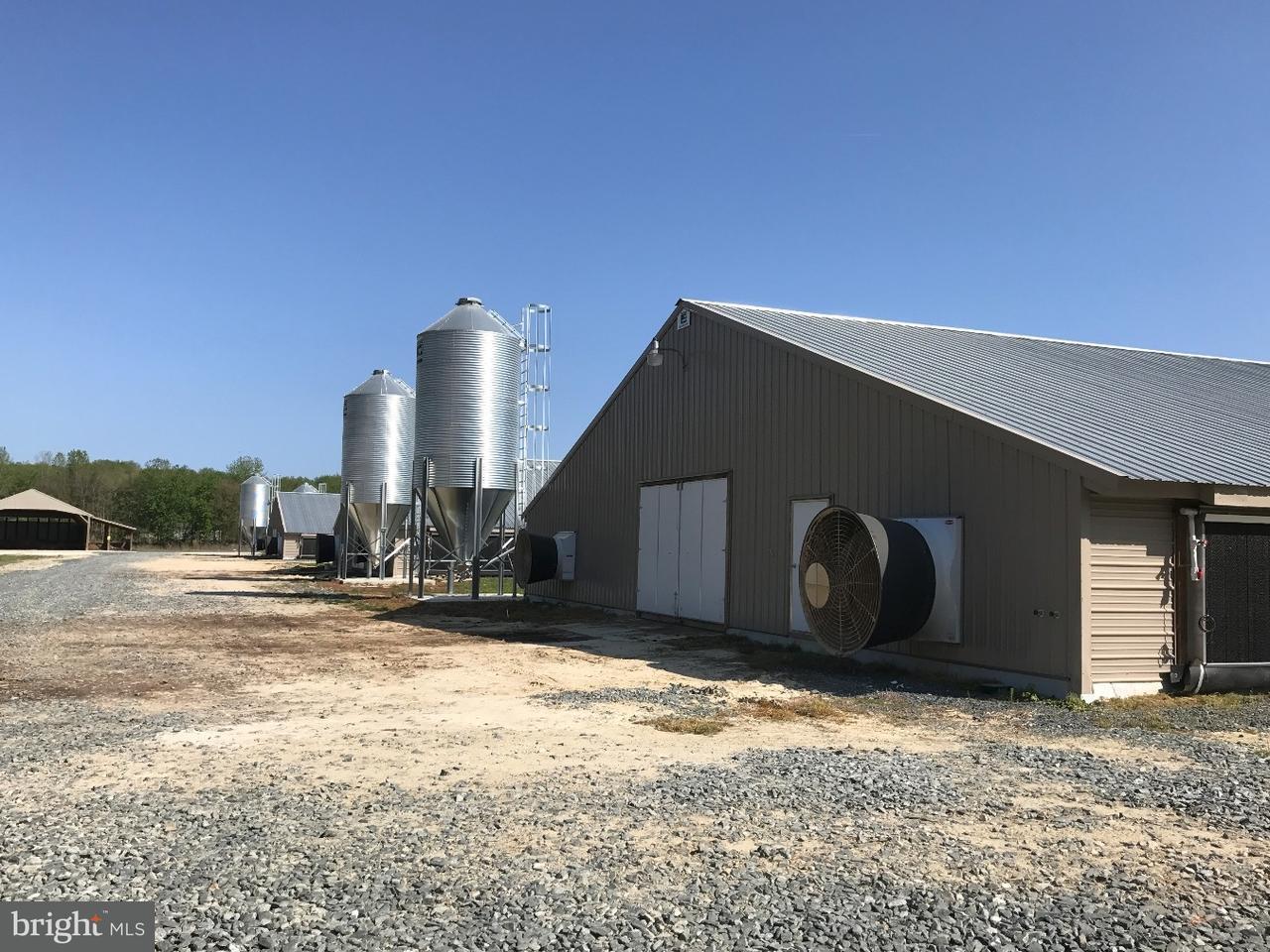 Farm / Hof für Verkauf beim 9092 OLD DAGSBORO Road Delmar, Maryland 21875 Vereinigte Staaten