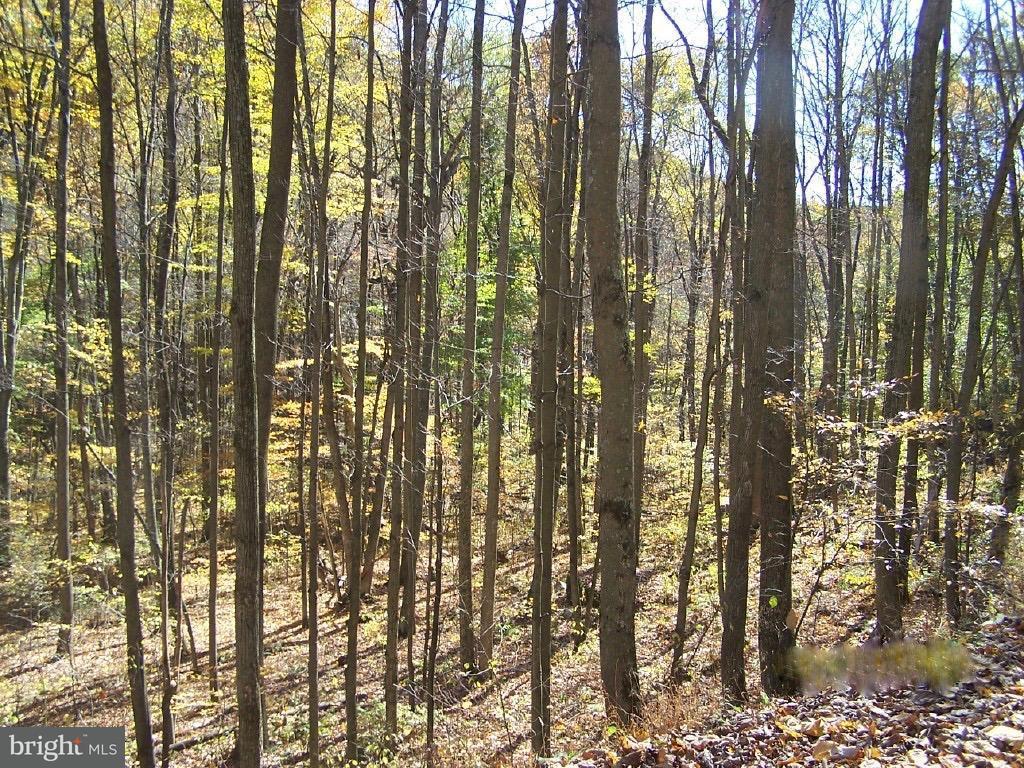 Land for Sale at Sulphur-Nethkin Rd Elk Garden, West Virginia 26717 United States