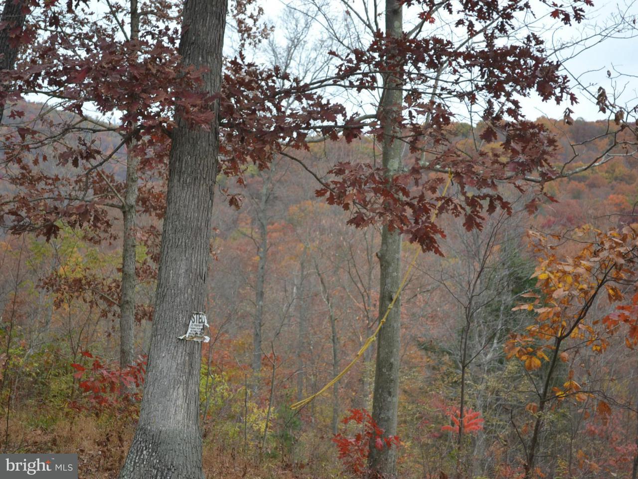 Land for Sale at 10501 Pin Oak Ct Ellerslie, Maryland 21529 United States