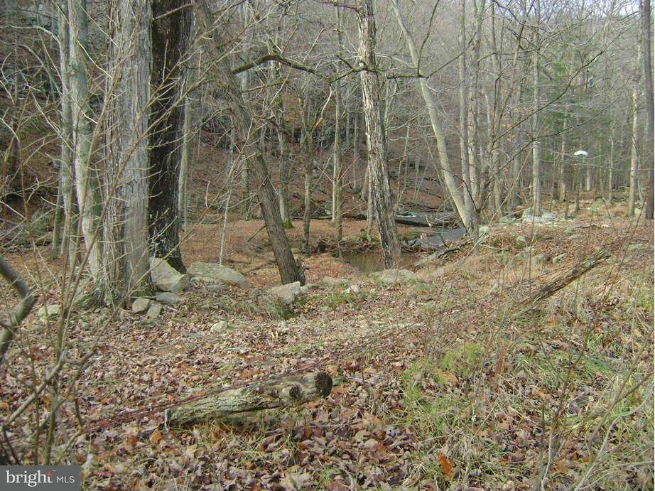 Land for Sale at Rt 127 Bloomery, West Virginia 26817 United States