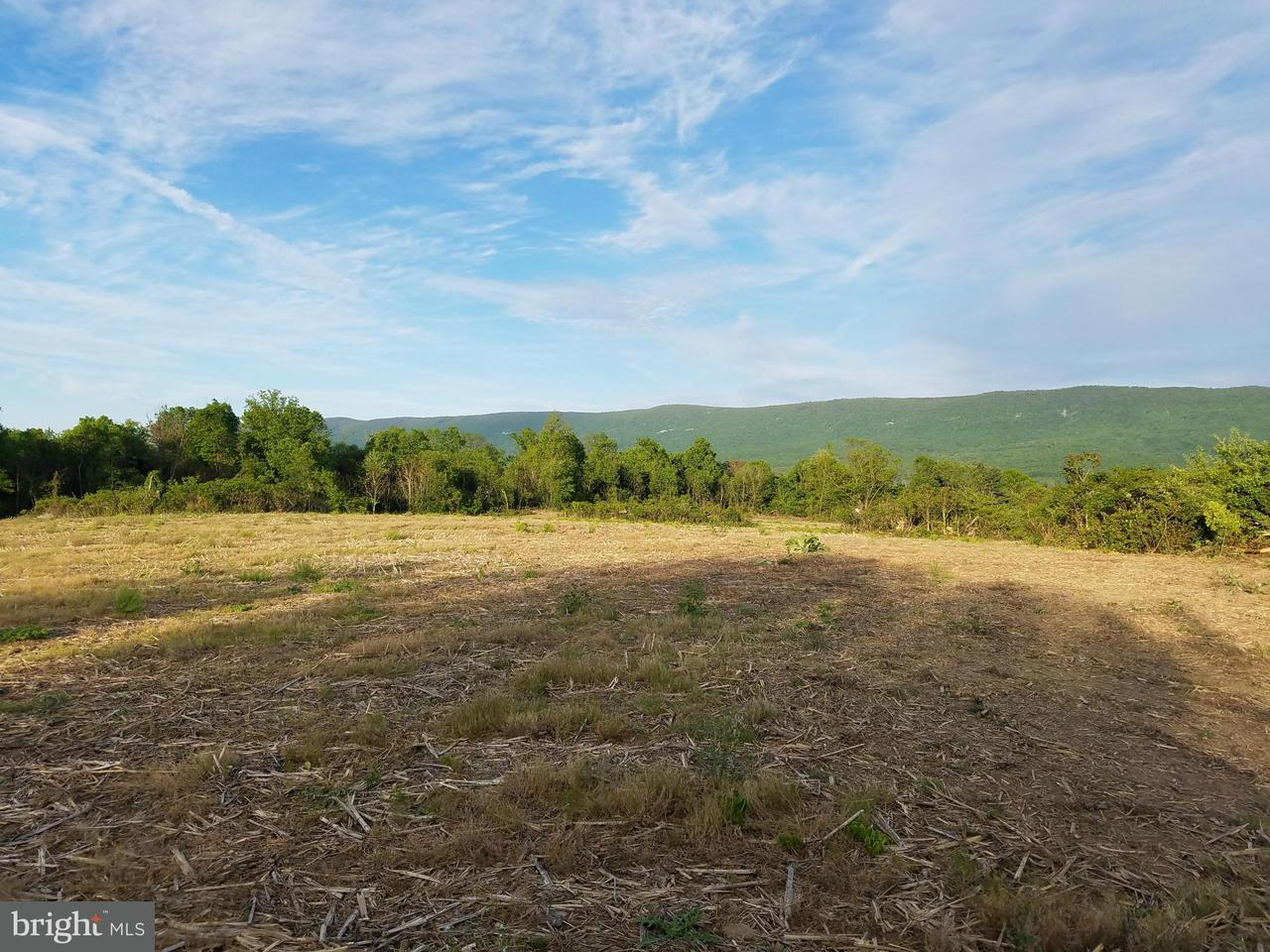 Land for Sale at Orchard Dr Mount Jackson, Virginia 22842 United States