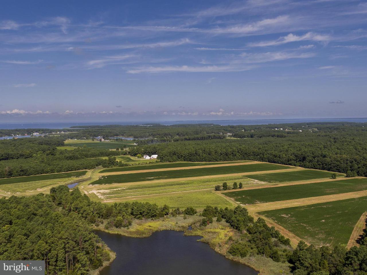 Additional photo for property listing at 5517 Ross Neck Road 5517 Ross Neck Road Cambridge, Μεριλαντ 21613 Ηνωμενεσ Πολιτειεσ