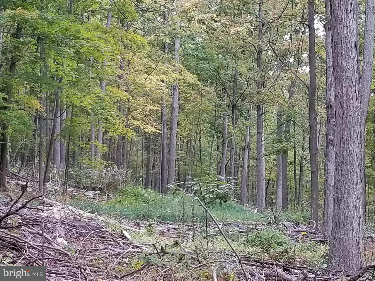 Additional photo for property listing at Cold Run Valley Road Cold Run Valley Road Berkeley Springs, West Virginia 25411 Estados Unidos