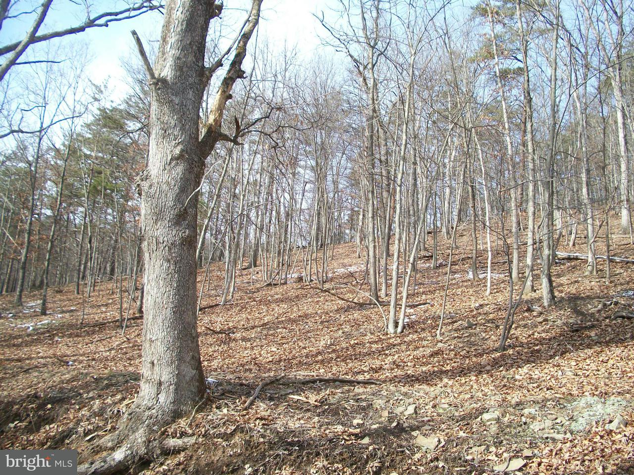 Land for Sale at Rt 3/2 Maysville, West Virginia 26833 United States