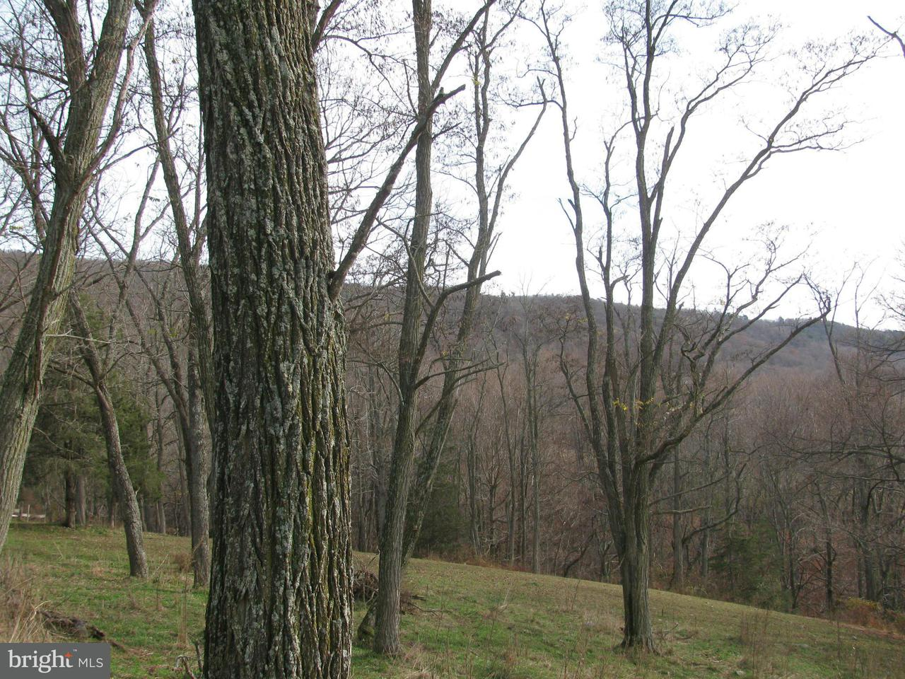 Land for Sale at Basore Rd Mathias, West Virginia 26812 United States