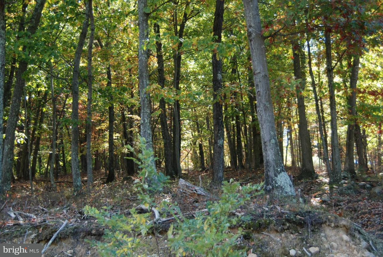 Land for Sale at Scott's Ridge Drive Fisher, West Virginia 26818 United States