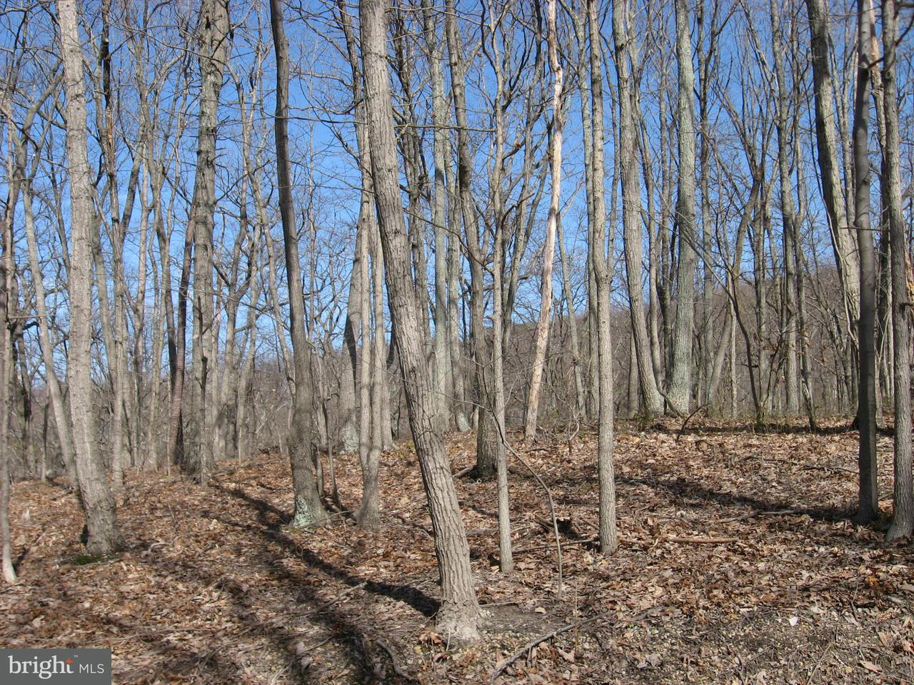 Land for Sale at Lt 43 Hummmingbird Lane Star Tannery, Virginia 22654 United States