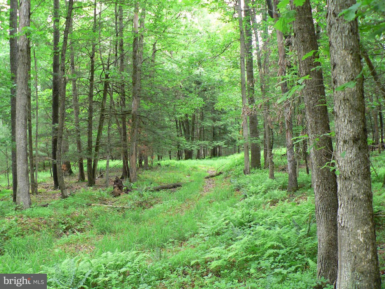 Land for Sale at 7865 Blue Gray Trail Hwy Brandywine, West Virginia 26802 United States