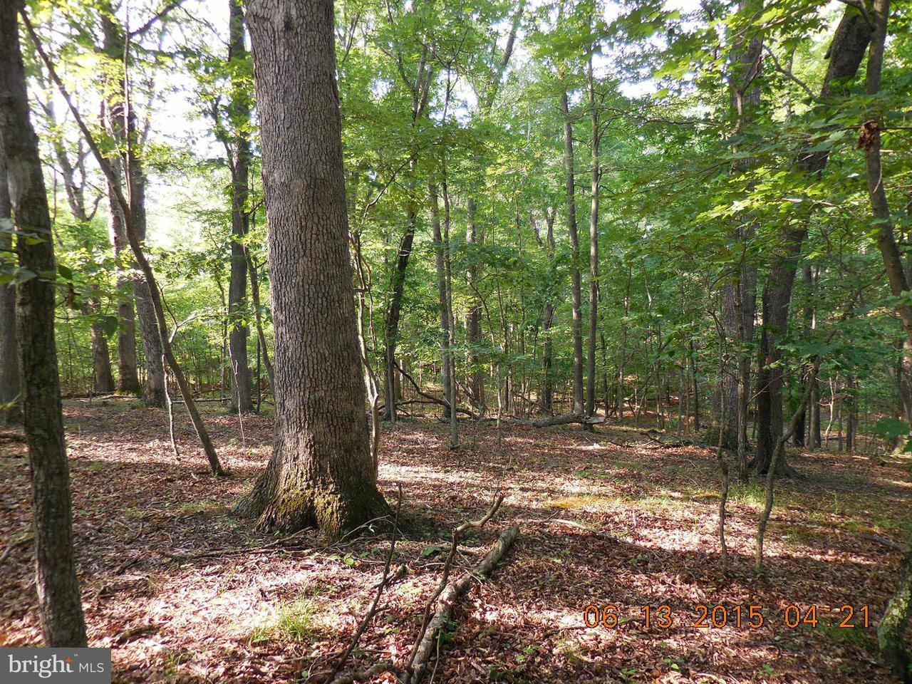 Land for Sale at Sycamore Ln Gore, Virginia 22637 United States