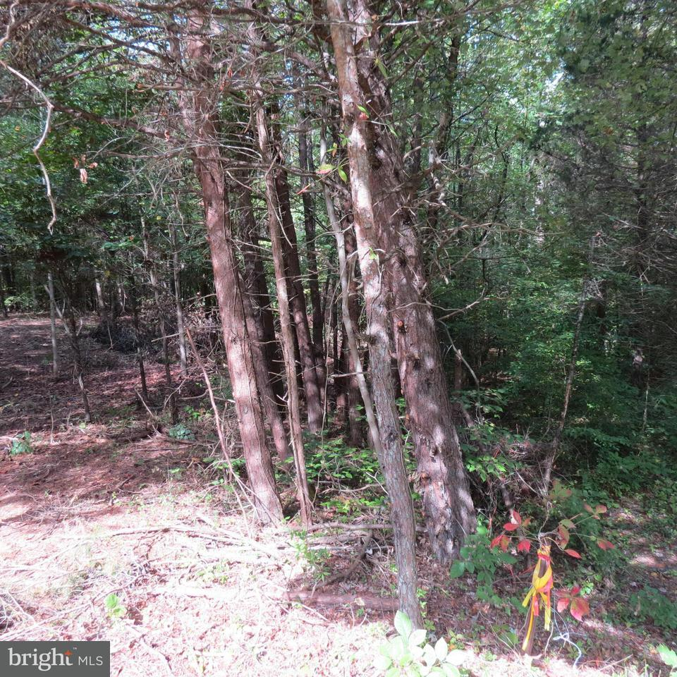 Additional photo for property listing at N Anna Dr  Louisa, Virginia 23093 United States