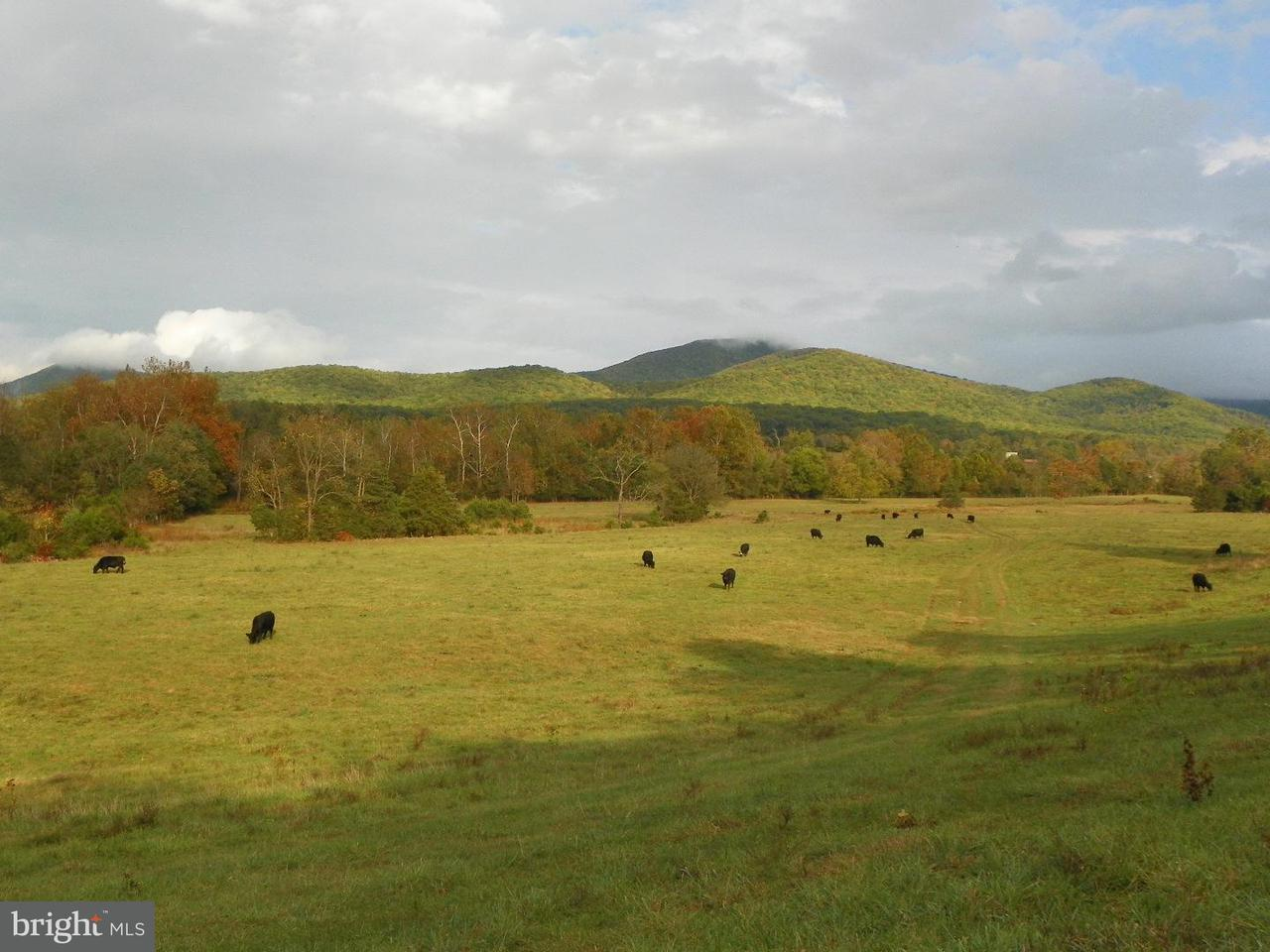 Land for Sale at 1410 WHISPERING HILL Road 1410 WHISPERING HILL Road Luray, Virginia 22835 United States