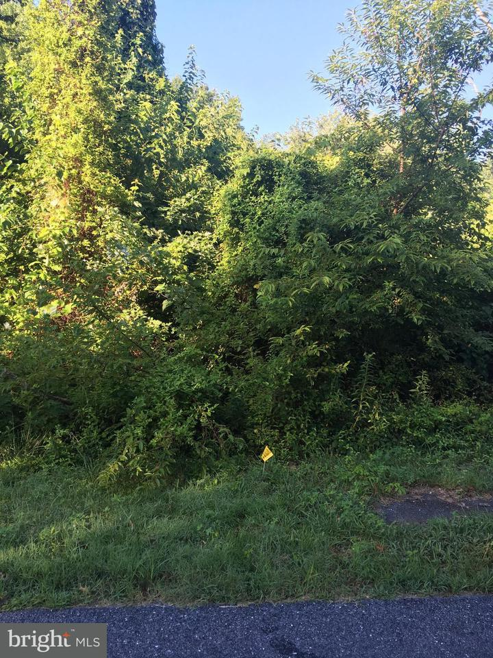 Land for Sale at 27021 Bee Tree Rd Henderson, Maryland 21640 United States