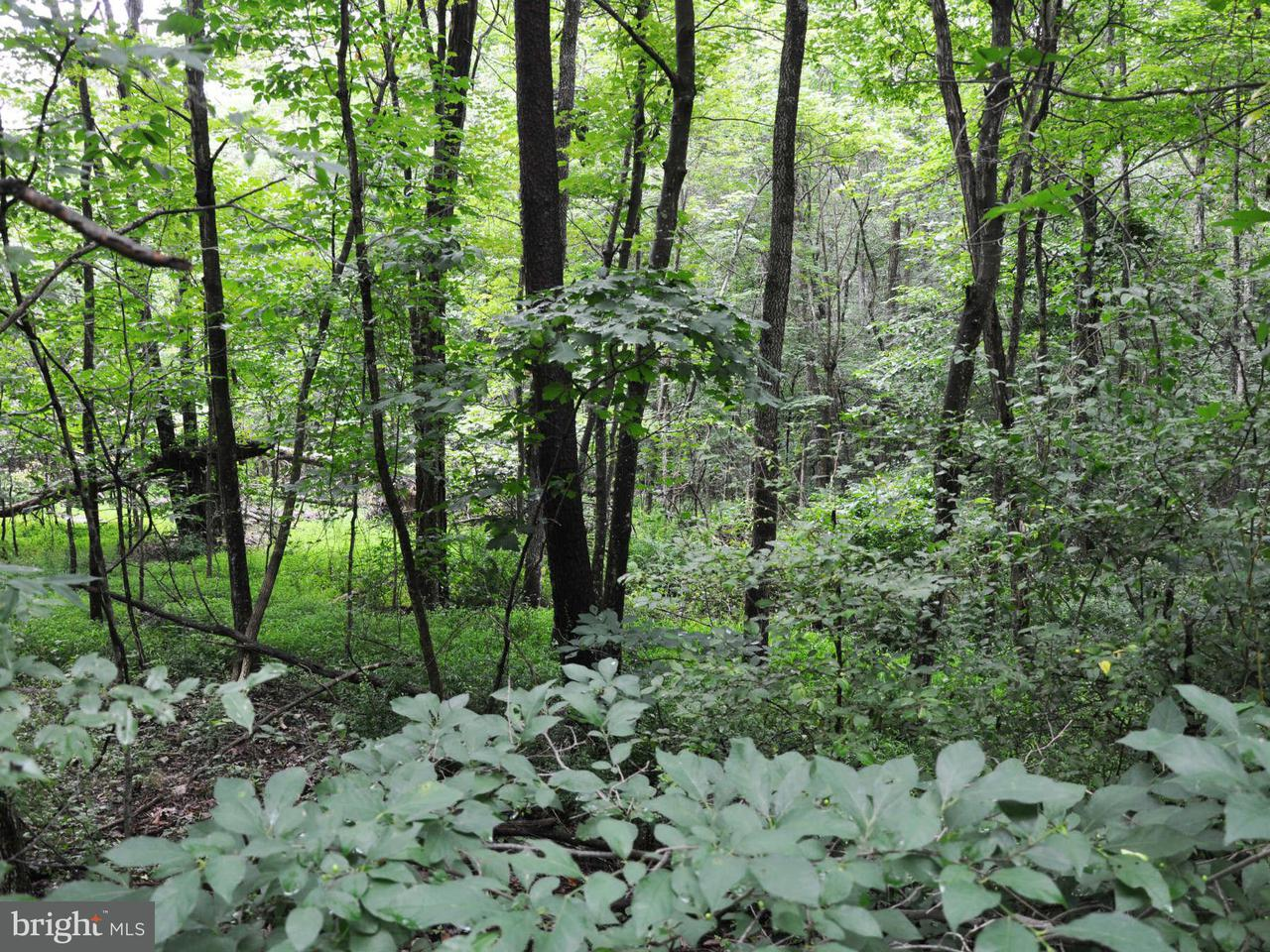Additional photo for property listing at L-55 Logger Dr  Gore, Virginia 22637 United States