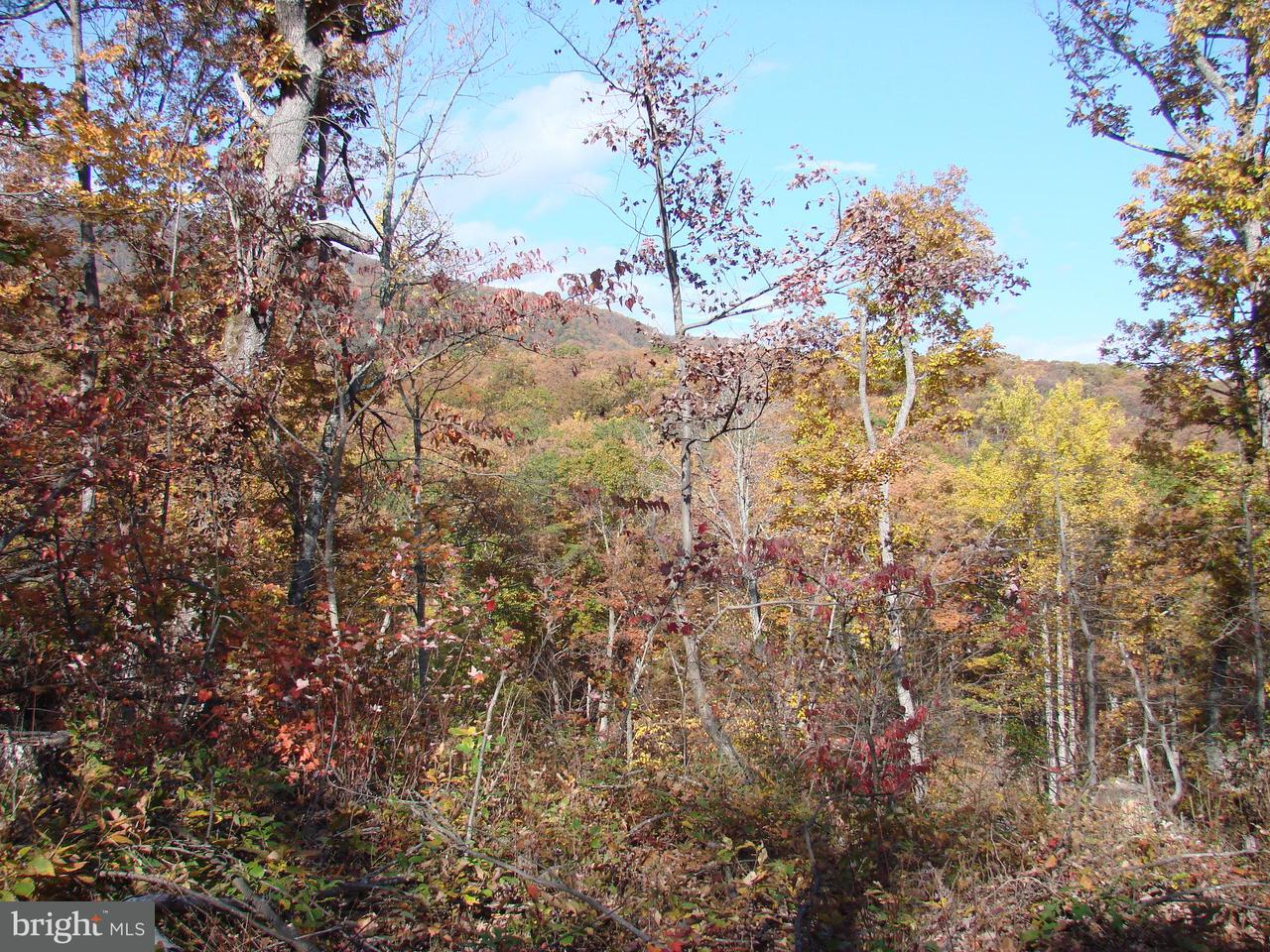 Additional photo for property listing at 4215 Page Valley Road 4215 Page Valley Road Luray, Virginia 22835 Verenigde Staten