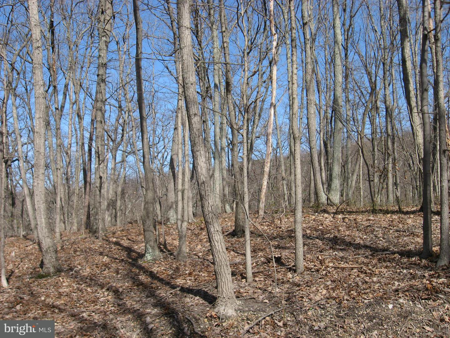 Additional photo for property listing at Lt 43 Hummingbird Lane  Star Tannery, Virginia 22654 United States